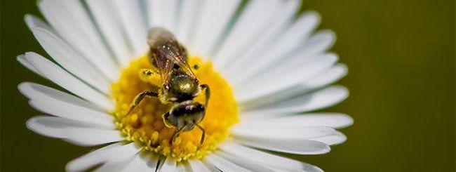 Le api sono più veloci dei computer