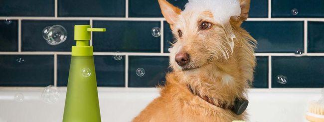 WhistleGPS, un collare hi-tech per i cani