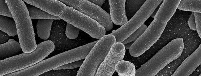 Allarme per i cellulari: il 90% è pieno di batteri