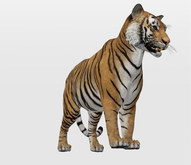 Google Animali 3D Tigre