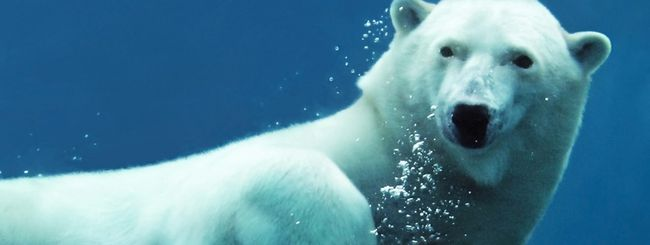 Google Maps tra orsi polari e mondi sottomarini