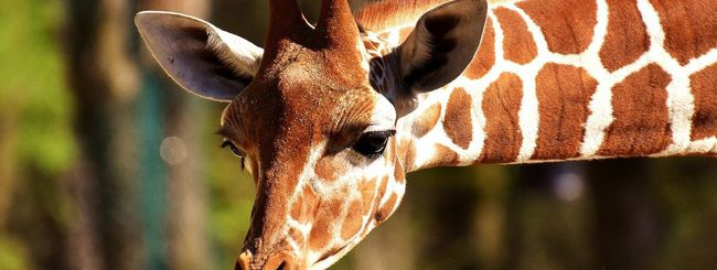 Google, IA identifica la fauna per i ricercatori