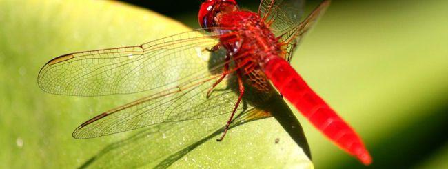 Google Dragonfly, ricerche censurate in Cina