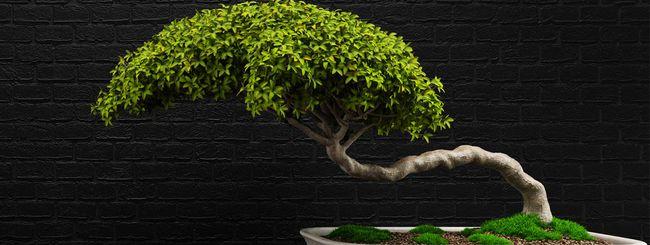Air Bonsai: il bonsai che fluttua nell'aria