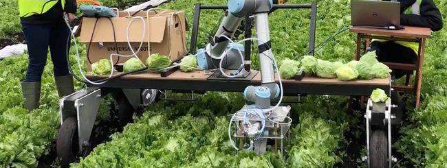 Vegebot, arriva il robot che raccoglie la lattuga