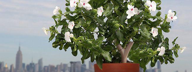 Flower Power, il sensore per la cura delle piante