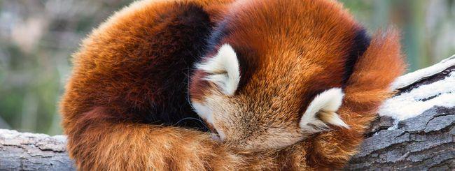 Project Quantum, il nuovo web engine di Firefox