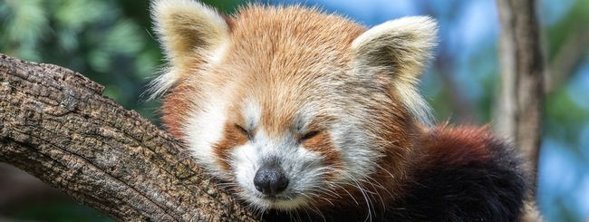 Firefox e consumo di RAM, soluzione in arrivo