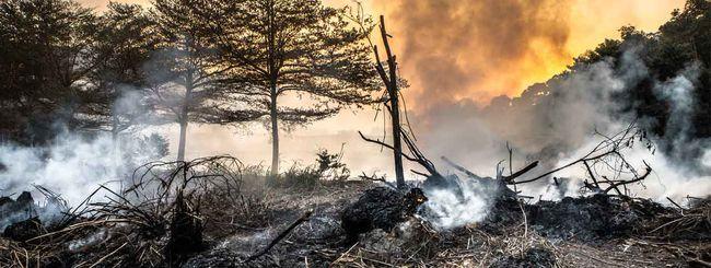 Google e GFW contro la deforestazione